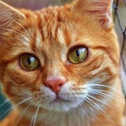 За лучшую прогнозистку среди кошек уплачено 4 миллиона