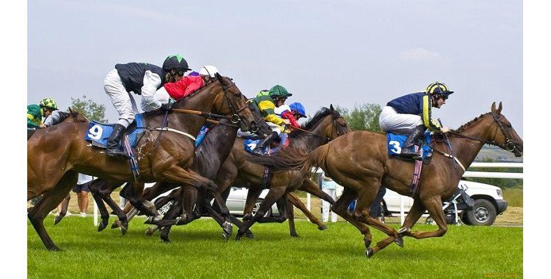 Секреты лошадиных скачек. Что нужно знать, чтобы подняться на них
